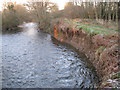 SX8475 : Recent erosion, east bank of the River Teign by Robin Stott