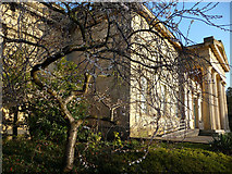 SE5952 : Autumn Cherry outside Yorkshire Museum by Phil Champion