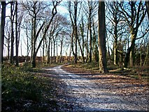 SP1729 : Path in the wood by Michael Dibb