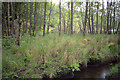 NM5154 : Stream from Lochan a Ghurrbain, near Tobermory by John Rostron