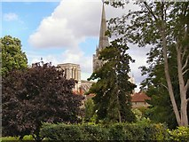SU8504 : Bishop's Palace Gardens & Chichester Cathedral from the city walls by David Dixon