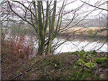 TG2407 : View across the River Yare from the Deal Ground by Evelyn Simak