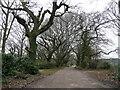 SY8888 : Oak-lined lane by Jonathan Billinger