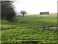 TG4601 : Pasture in Belton Marshes east of the River Waveney by Evelyn Simak
