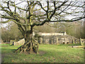 TG4601 : Tree with exposed roots in Belton Marshes by Evelyn Simak