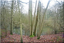 TQ5244 : Pond in the woods, Penshurst Park by N Chadwick