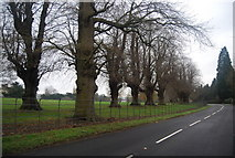 TQ5244 : Trees in Penshurst Park by the B2176 by N Chadwick