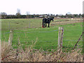 TG4904 : Pony in paddock south of Doles Farm by Evelyn Simak