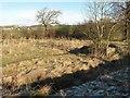 NS7976 : Glenhead Feus Farm (remains) by Texas Radio and The Big Beat