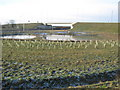 NZ3716 : Balancing ponds at Longnewton A66 junction by peter robinson