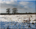 TM2795 : Snowy meadow east of Woodton Road by Evelyn Simak