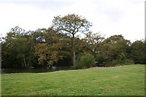 SJ7044 : Pond near Pewit Hall by Dave Dunford