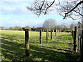 SO3103 : Row of posts in a field by Jonathan Billinger