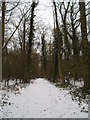 TL0439 : King's Wood in the snow by Mike Nicholson