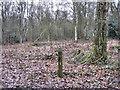 SJ8064 : Orienteering marker by Jonathan Kington