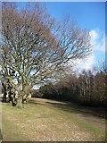 SZ0895 : Bournemouth : Field & Trees by Lewis Clarke