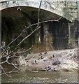 NU1800 : Ducks on a sandbank by David Clark