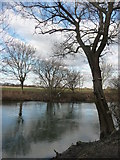SZ0995 : Bournemouth : The River Stour & Tree Swing by Lewis Clarke