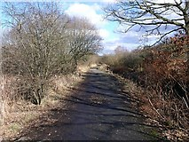 NS7177 : Woodland track, Dumbreck Marsh by Robert Murray