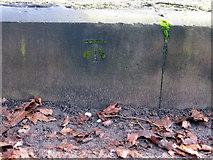 SJ3787 : Sefton Park - perimeter wall bench mark #11 by John S Turner