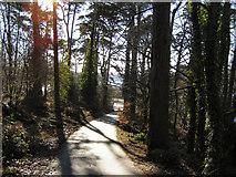 SH5571 : Path to Church Island by David Dixon