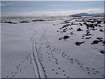 NN7372 : The course of Allt Geallaidh looking south towards Carn nan Seabhag by ian shiell
