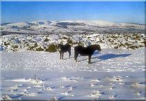 SO2455 : Ponies on the Hergest Ridge - 1 by Trevor Rickard