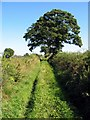 NY4662 : Bridleway west of Bullersike, near Laversdale by Andrew Curtis