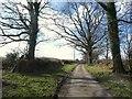 SX3280 : Lane at Trewarlett by Derek Harper