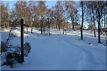 NH9317 : Footpath through birch woods by Dorothy Carse