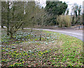 TL9383 : Spring flowers beside the road past Shadwell Stud by Evelyn Simak