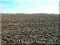 SE9828 : Farmland off Swanland Dale by JThomas