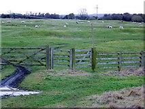 ST5431 : Gate near Keinton Mandeville by Maigheach-gheal