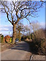 TM3365 : Rendham Road, Bruisyard by Adrian Cable
