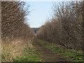 TL4754 : Worts Causeway: permissive bridleway - 1 by John Sutton