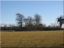 O1063 : Tumulus at Micknanstown, Co. Meath by Kieran Campbell