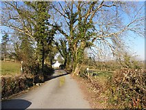 H1194 : Cappry Lane by Kenneth  Allen