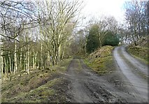 SD9726 : A choice of route in Callis Wood, Erringden by Humphrey Bolton