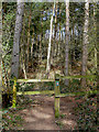 SO8281 : Footpath in Kingsford Forest Park, Worcestershire by Roger  Kidd