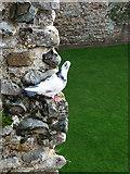 TM2863 : One of the current residents of Framlingham Castle by Chris Gunns