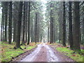 SX3877 : Forest track in Gunoak Wood by Rod Allday