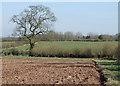 SO7891 : Arable land near Lower Beobridge, Shropshire by Roger  Kidd