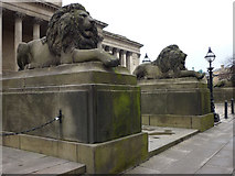 SJ3490 : Stone lions guarding the Plateau, St George's Hall by Karl and Ali