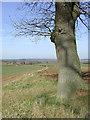 SO7890 : Farmland and tree near Beobridge, Shropshire by Roger  Kidd