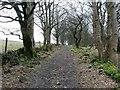 NS7378 : Track at Dam Wood by Robert Murray