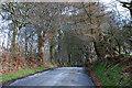 SN6569 : Avenue of birch trees near Penlan farm by Nigel Brown