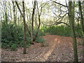 SJ6170 : Woodland Scenery in Petty Pool woods by Dr Duncan Pepper