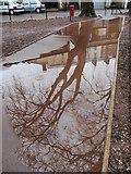 SX9164 : Puddle, Upton Park by Derek Harper