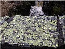 NY5410 : Lichen on bridge by William Bartlett