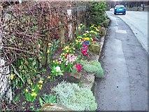 NZ5719 : Road-side flowers in Lazenby village by Philip Barker